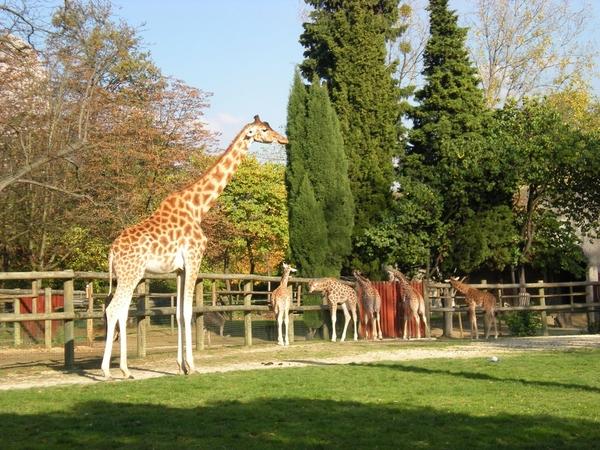 Мини зоопарк в Париже